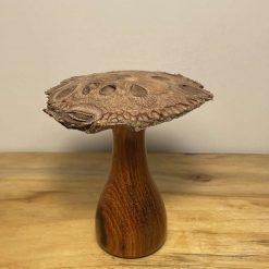 Banskia Nut Toadstool Mushroom Umbilo