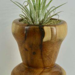 Yew Vase
