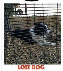 Lost Dog Capture 2022 Slimline calendar