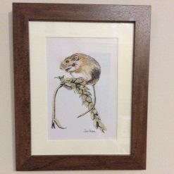 """""""Harvest mouse"""", ink and watercolour drawing"""
