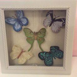 Butterflies in box frame