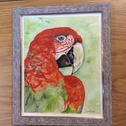 """""""Parrot"""", framed watercolour painting SOLD"""