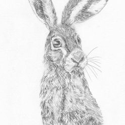 Hare Pencil Sketch by Sharon Louise Brooks Size 21cm by 29.7 cm