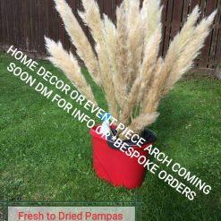 Fresh to Dried Pampas Home Decor/Event piece